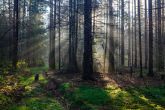 Morning sunlight in wood Stock Photography