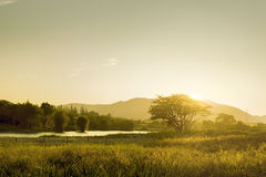 Morning sunny landscape. Foggy morning sunny landscape with sun over the tree, grass and lake Royalty Free Stock Photography