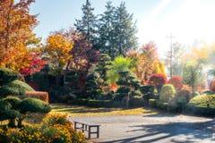 Morning sunrays glow in autumn in a garden in Japan. Early Morning sunrays in a Garden in autumn at Fujikawaguchiko, a resort town on the side of Lake Kawaguchi stock image