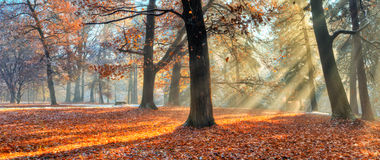 Morning sunrays in late autumn forest. Beatiful morning sunrays in late autumn forest, trees covered with snow on background royalty free stock image