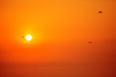 Morning sunrise and flying birds Royalty Free Stock Photos