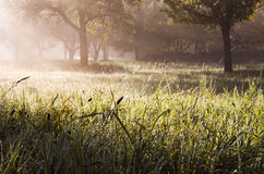 Morning sunrise in a garden Royalty Free Stock Image