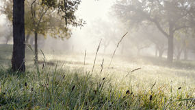 Morning sunrise in garden Royalty Free Stock Photography