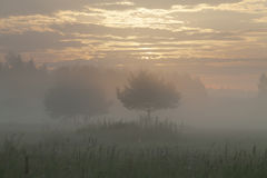 Morning sunrise over a field Royalty Free Stock Images