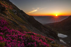 Morning sunrise from the peak of mountain. Morning sunrise with rhododendrons flowers in foreground , from the peak of Pietrosu Rodeni in the National Park stock photos