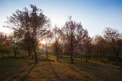 Morning sunrise with sakura Stock Images