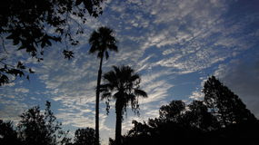 Morning Sunrise. Silhouetted palm trees in morning sunrise Royalty Free Stock Photos