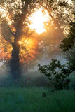 Morning sunrise through trees Royalty Free Stock Image