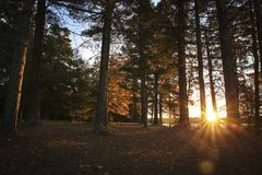 Morning Sunrise in the Woods Stock Images