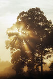 Morning Sunset. The sun rises through the trees in a field Stock Photo