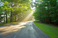 Morning sunshine Stock Image