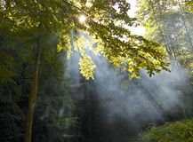 Morning Sunshine In A Forest Stock Photo