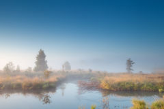 Morning sunshine over misty swamp Stock Images