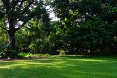 Morning sunshine in the park stock photo