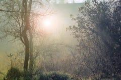 Morning Sunshine Stock Photography