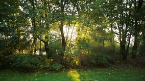 Morning Sunshine via Trees in Late Summer with Sun Rays and Lense Flare. Beautiful Morning Sunshine via Trees in the Park in Late Summer during Sunrise with Sun stock footage