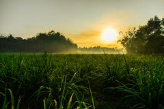 Morning (sunsrise) in farmfield Stock Photo