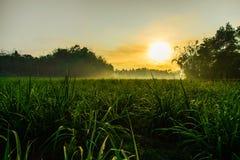 Morning (sunsrise) in farmfield Stock Photo