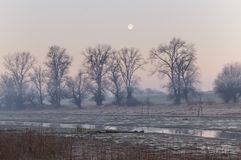 Morning in swamp stock photography