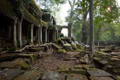 Morning at Ta Prohm Stock Images