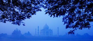 Morning Taj Mahal. Trees are well framed on the Taj Mahal Stock Photo