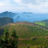 Morning at tea plantation. Munnar, Kerala, India Stock Images