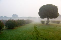 Morning thick fog in the park stock photography