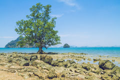Morning time in Thailand island. 2016 royalty free stock images