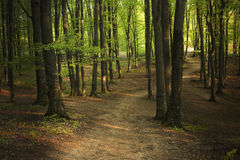 Morning trail in forest Stock Photography