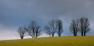 Morning tree atop a hill, cloudy sky over the clearing Royalty Free Stock Image
