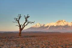 Morning tree Royalty Free Stock Image