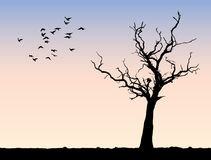 Morning tree landscape. Lonely tree with serene morning sky and birds flying Stock Photography