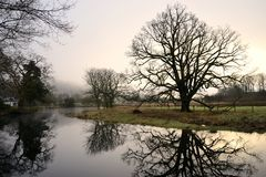Morning tree. royalty free stock photo