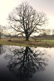 Morning tree. Stock Photo