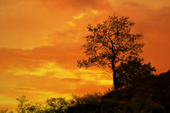 Tree standing silhouetted against the morning sunrise Royalty Free Stock Photo