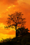 Tree standing silhouetted against the morning sunrise Royalty Free Stock Images