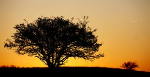 Morning tree in thick sun stock image