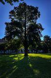 Morning tree. Washington DC shadow sun lights trees beautiful blue grass fun lovely great wonderful life live love virtual city Royalty Free Stock Photography