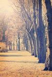 Morning trees Royalty Free Stock Image