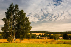 Morning tress. A photo of morning landscape in Adrspach rocks in Czech Republic stock photos