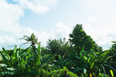 Morning on a tropical island. Fresh tropical greens, palms and blue sky with clouds. Stock Photo