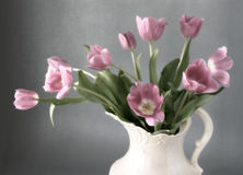 Morning Tulips Royalty Free Stock Image