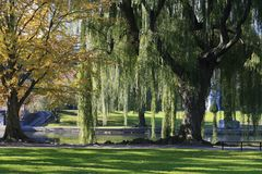 Morning in an Urban Park Horizontal. Morning in an urban park, a weeping willow stands prominently in front of a pond Royalty Free Stock Photography