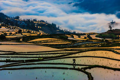 Morning View of China Rice Fields and Peasant walking Royalty Free Stock Images