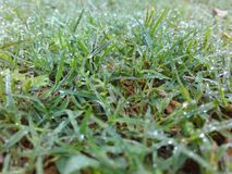 Morning view. Morning grass blade DUfactor drops Royalty Free Stock Images