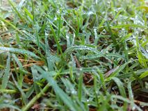 Morning. View grass due waterreflection Royalty Free Stock Image