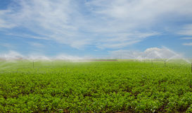 Morning view of a hand line sprinkler system in a farm field Stock Images