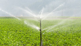 Morning view of a hand line sprinkler system in a farm field Royalty Free Stock Photography
