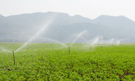morning view of a hand line sprinkler system in a farm field Royalty Free Stock Photo