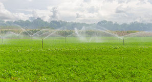 morning view of a hand line sprinkler system in a farm field Royalty Free Stock Image